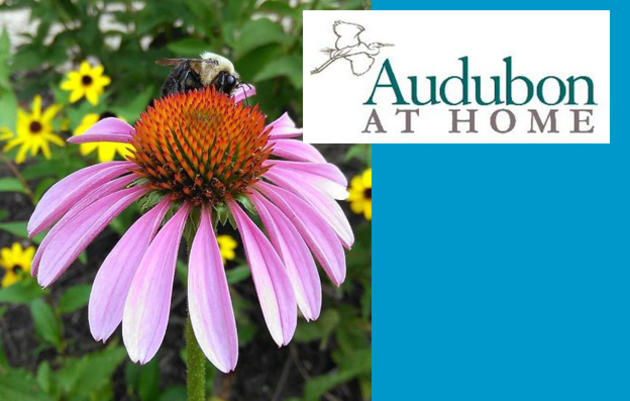 Audubon at Home Monthly Programs & Property Enrollment