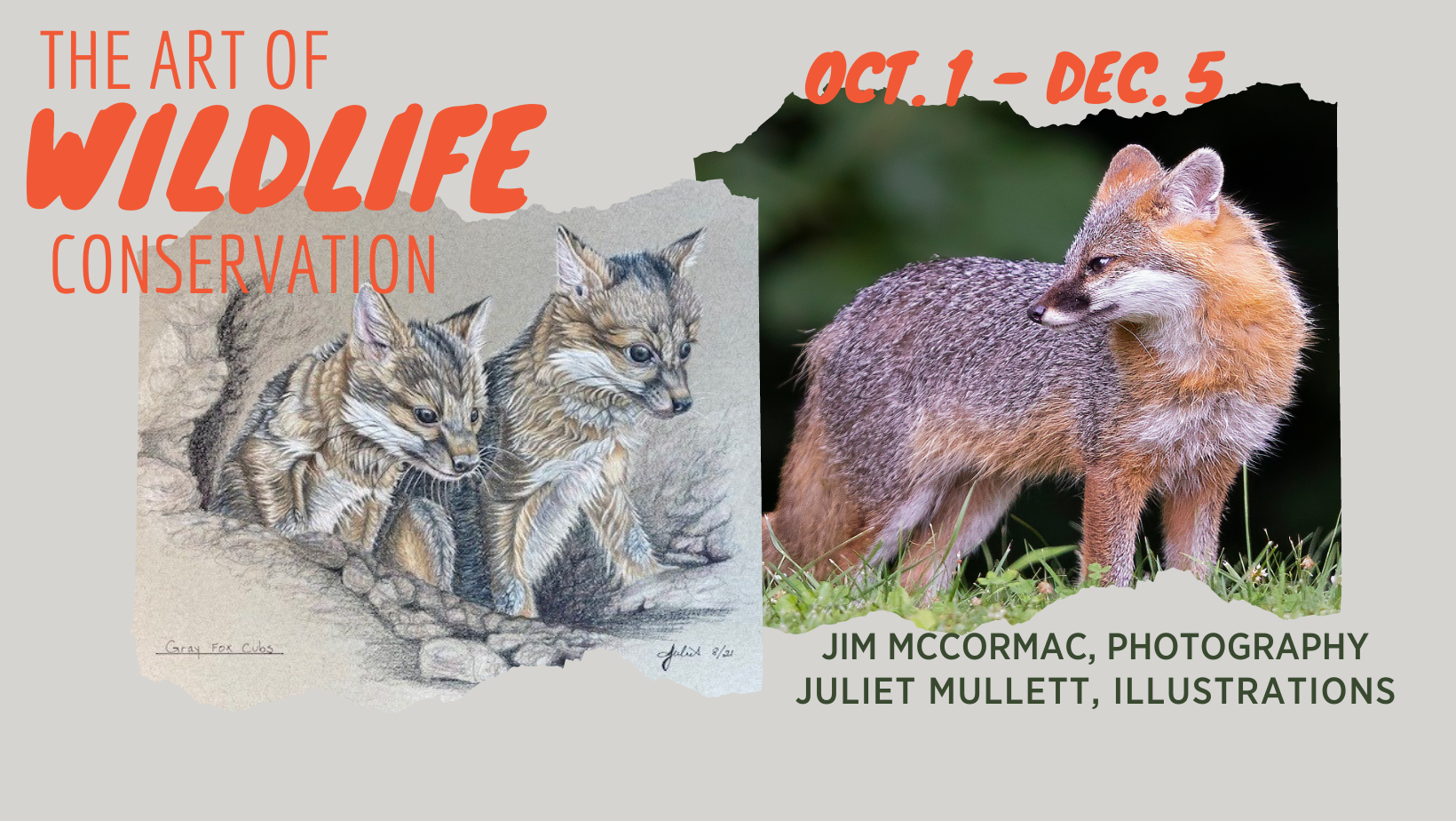 The Art of Wildlife Conservation, Jim McCormac and Juliet Mullett